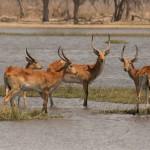 Botswana - 5 Days extension