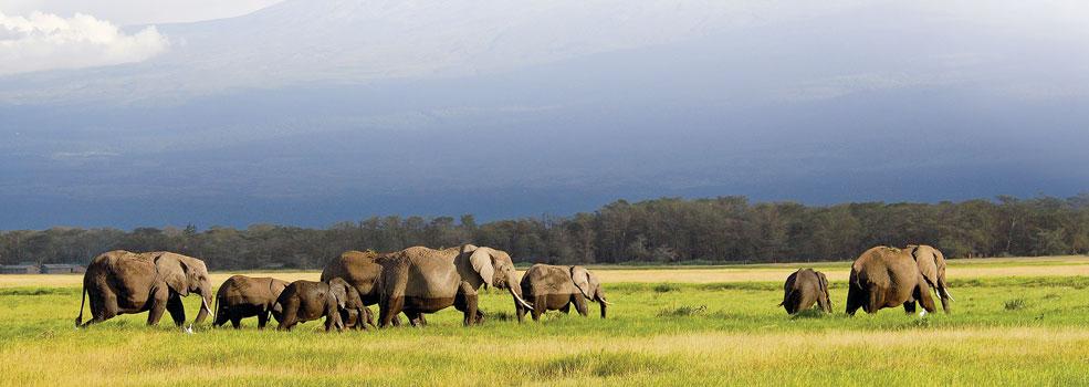 elephant-family985x350