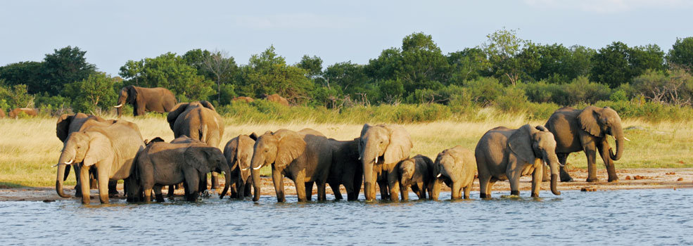 elephants-hwange-np985x350