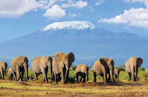 Safari to Serengeti - Tanzania elephants and Mt Kilimanjaro