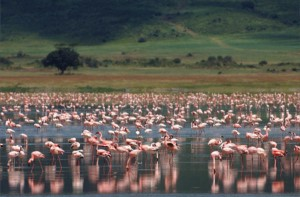 Tanzania Adventure flamingoes beyond Ngorongoro Crater