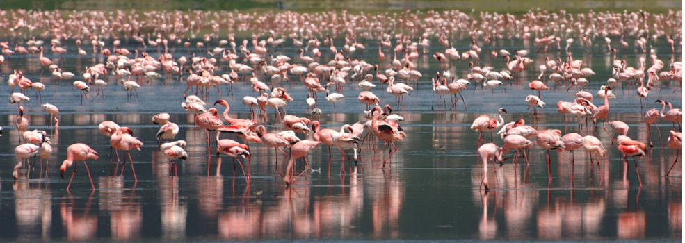 flamingo-beyond-ngorongoro-crater-lodge-985x350