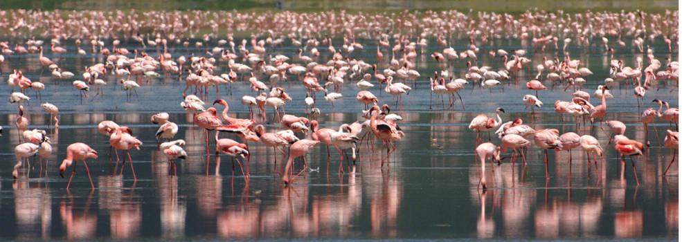 flamingo-beyond-ngorongoro-crater-lodge-985x350