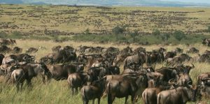 Kenya Safaris | Luxury Safari Vacations | Great Safaris