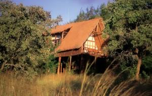 ngon-house