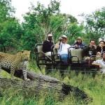 Leopard spotting on a gamedrive