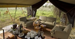 Luxury camping in the Serengeti