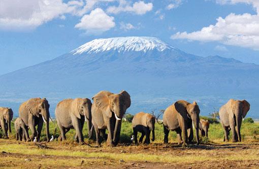 Great Safaris Enriching Life Experiences Elephant and Mount Kilimanjaro
