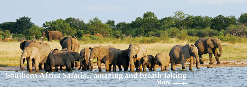 southern_africa_985x350