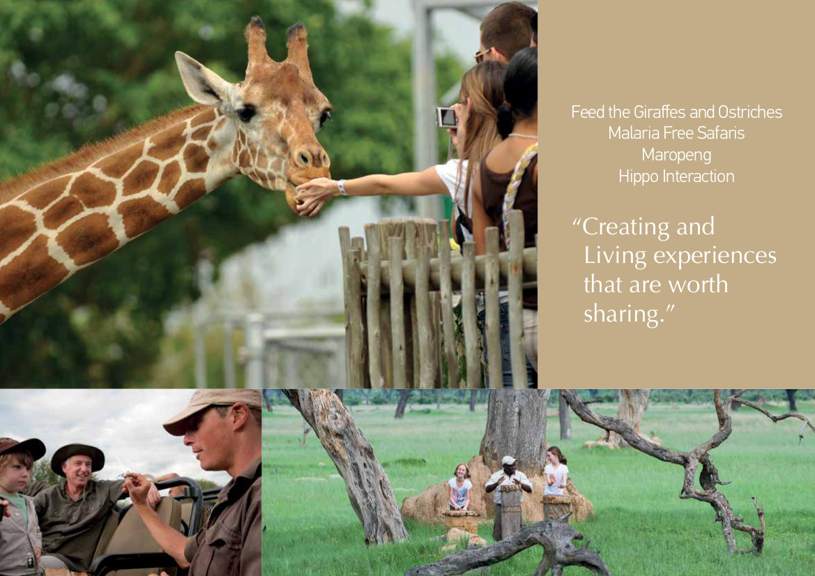 The Great Safari Experience 24