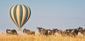 Kenya Flying Safari hot air ballon with gnus