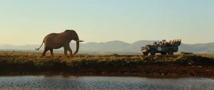 Thanda game drive with elephant Zululand Express Safari