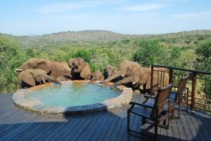 Thanda Tented Camp elephants at the pool