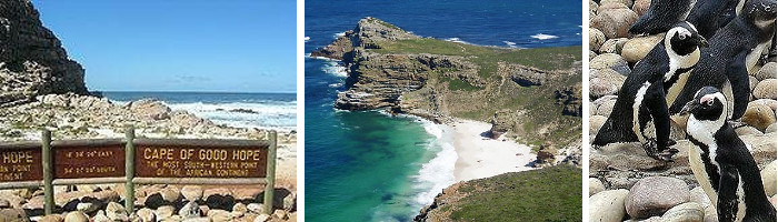 The Great Southern Safari Cape of Good Hope