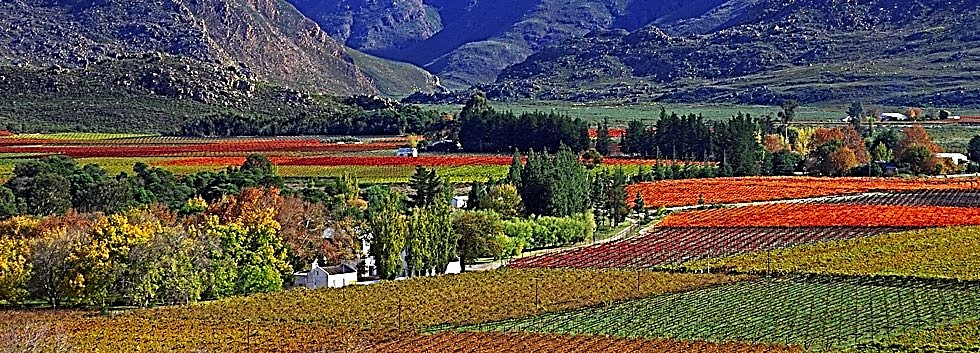 The Great Southern Safari Winelands panorama
