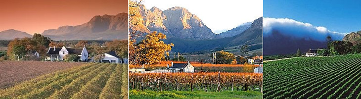 The Great Southern Safari Cape Winelands
