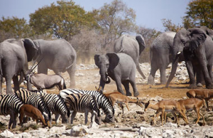 Namibia Flying Safari - 12 Days Etosha game
