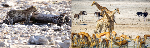 Namibia Flying Safari - 12 Days