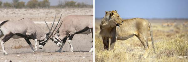 Namibia Flying Safari - 12 Days