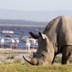 Kenya & Tanzania Overland Adventure Lake Nakuru