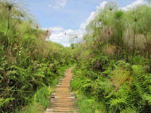 Uganda Explore Bigodi Wetlands