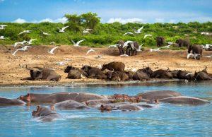 Uganda Explore Kazinga Channel wildlife