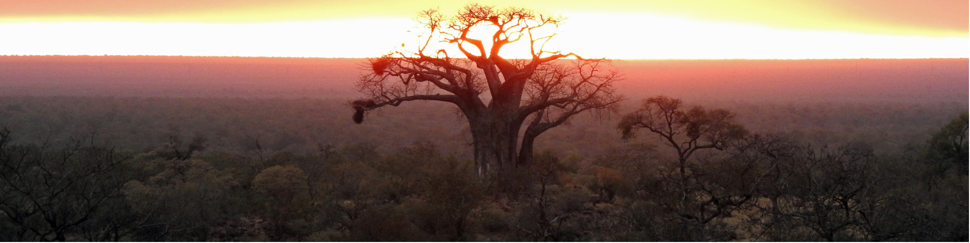 Baobab_Tree_sunrise_1920x482