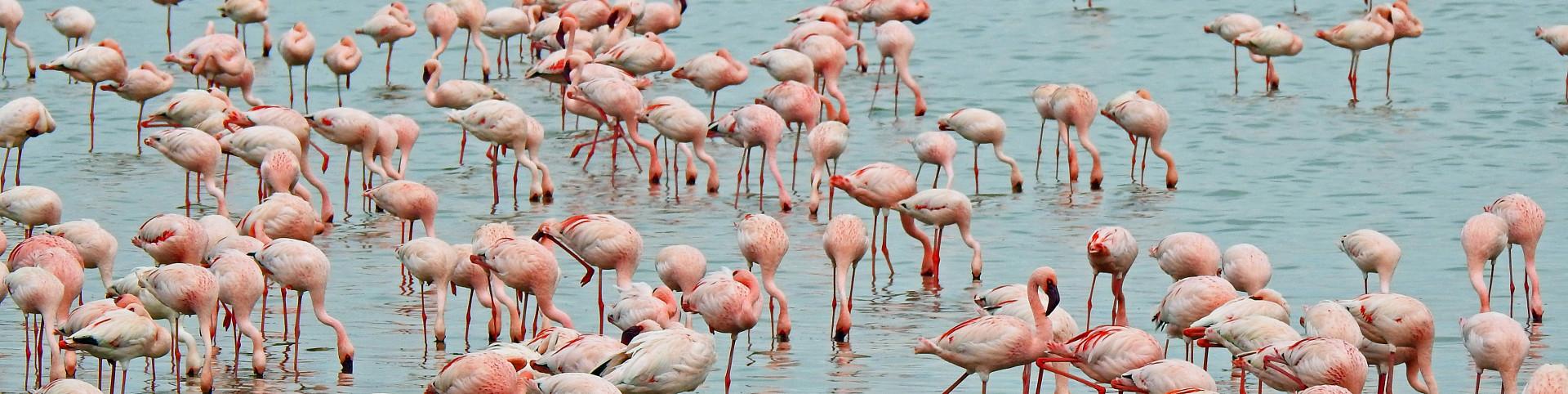 Flamingos_DSCN1045_1920x482