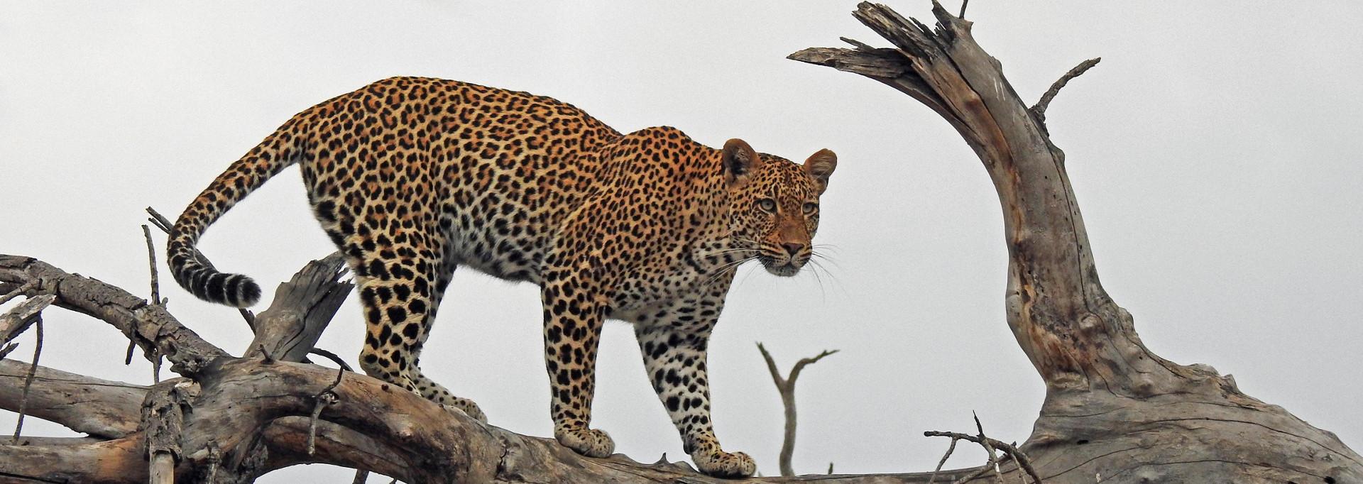 Leopard_DSCN3860_1920x682