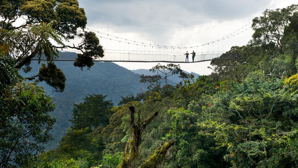 Rwanda Primate & Wildlife Adventure Nyungwe canopy walk